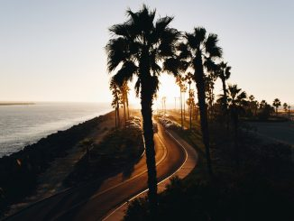Palm tree boulevard by thatsmrbio (Unsplash.com)