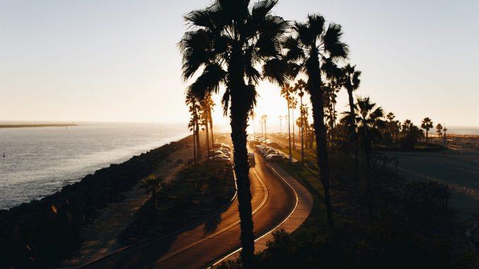 Palm tree boulevard by thatsmrbio (Unsplash.com)