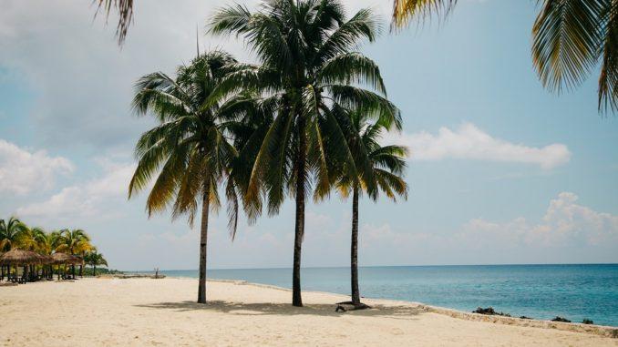 Palm trees at noon by clemono2 (Unsplash.com)