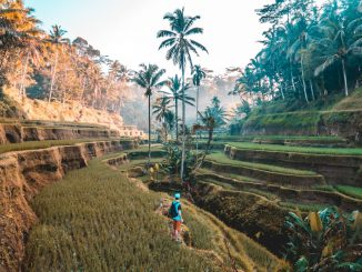 First morning of my backpacking trip around Bali. Woke up at 5 to meet up with a local I had never met which turned out to be the highlight of my trip. by jamie_fenn (Unsplash.com)