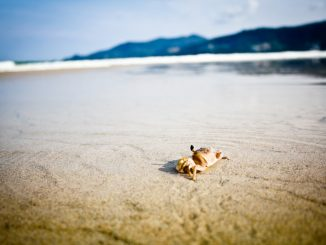Small crab on sand beach by dtopkin1 (Unsplash.com)